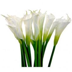 Цветы Каллы продажа поштучно