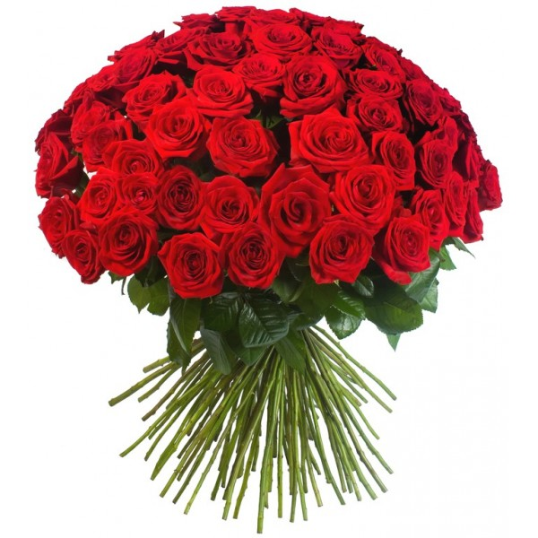 51 красная роза (заказ круглосуточно)