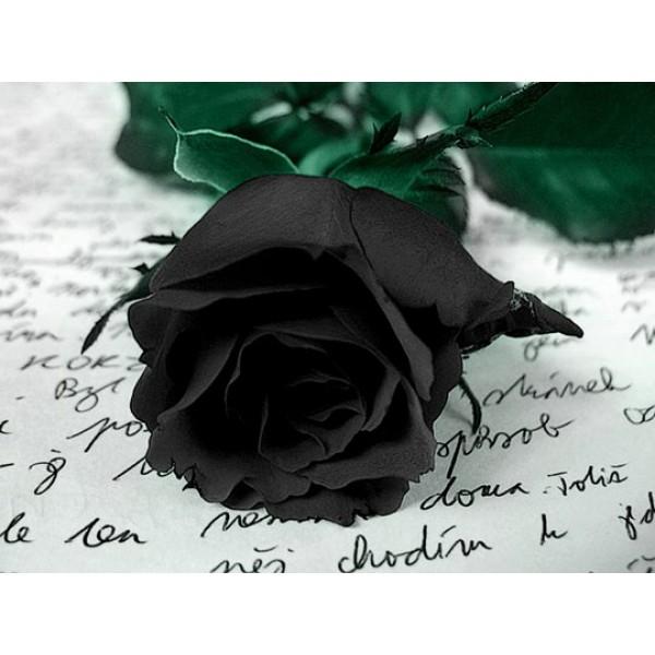 Черные розы поштучно от 9 штук